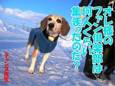 チャンスとティアラ+ココ-20120126-2.jpg