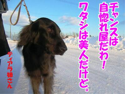 チャンスとティアラ+ココ-20120126-4.jpg
