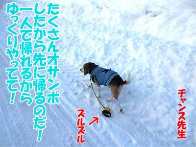 チャンスとティアラ+ココ-20120126-7.jpg