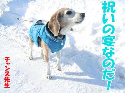 チャンスとティアラ+ココ-20120127-2.jpg