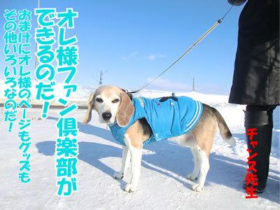チャンスとティアラ+ココ-20120127-3.jpg