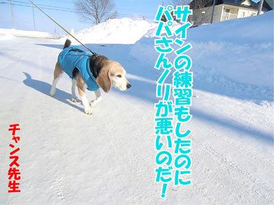 チャンスとティアラ+ココ-20120127-4.jpg