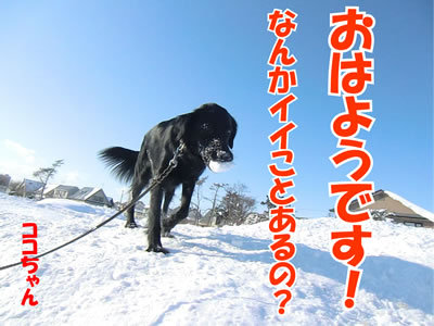 チャンスとティアラ+ココ-20120127-5.jpg