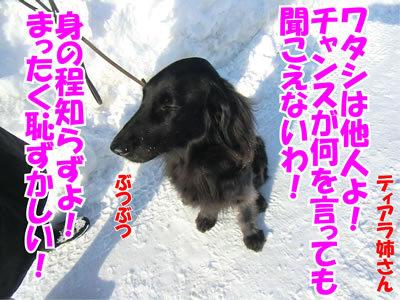 チャンスとティアラ+ココ-20120127-6.jpg
