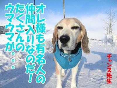 チャンスとティアラ+ココ-20120128-4.jpg
