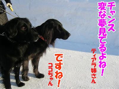 チャンスとティアラ+ココ-20120128-5.jpg