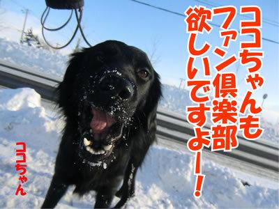 チャンスとティアラ+ココ-20120128-7.jpg