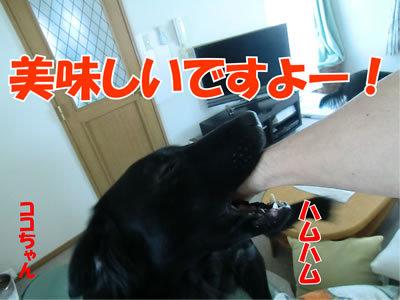 チャンスとティアラ+ココ-20120129-2.jpg