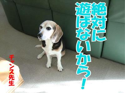 チャンスとティアラ+ココ-20120129-6.jpg
