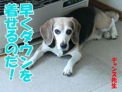 チャンスとティアラ+ココ-20120130-1.jpg