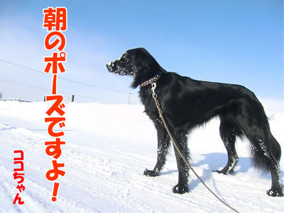 チャンスとティアラ+ココ-20120130-5.jpg