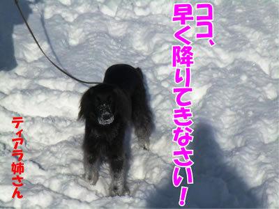 チャンスとティアラ+ココ-20120130-6.jpg