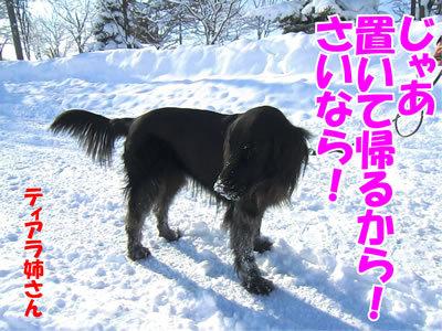 チャンスとティアラ+ココ-20120130-8.jpg