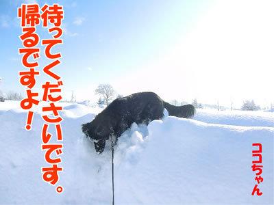 チャンスとティアラ+ココ-20120130-9.jpg