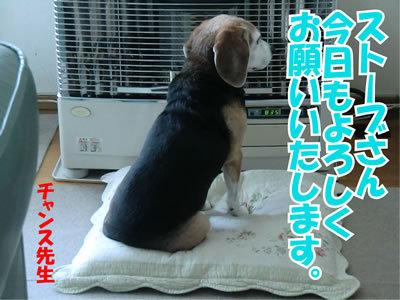 チャンスとティアラ+ココ-20120131-4.jpg