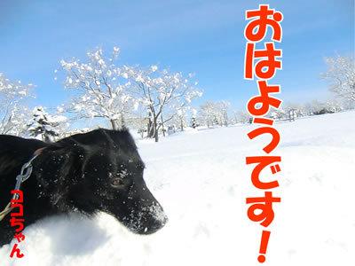 チャンスとティアラ+ココ-20120131-5.jpg
