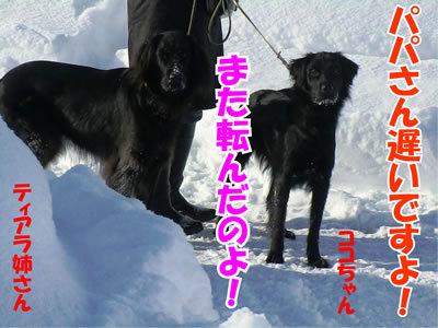 チャンスとティアラ+ココ-20120131-6.jpg