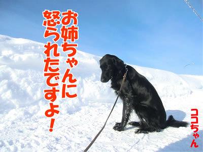 チャンスとティアラ+ココ-20120131-9.jpg