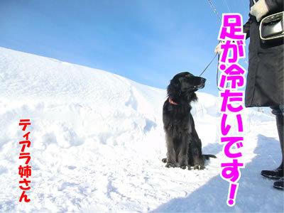 チャンスとティアラ+ココ-20120131-10.jpg