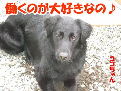 チャンスとティアラ+ココ-20100415-1.jpg
