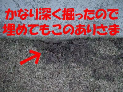 チャンスとティアラ+ココ-20100415-5.jpg