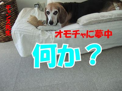 チャンスとティアラ+ココ-20100415-9.jpg