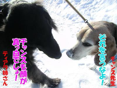 チャンスとティアラ+ココ-20120220-3-400.jpg