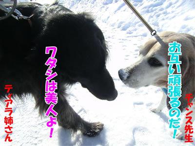 チャンスとティアラ+ココ-20120220-4-400.jpg