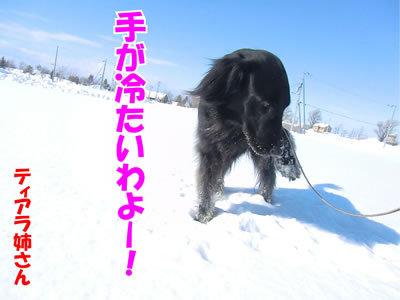 チャンスとティアラ+ココ-20120220-6-400.jpg