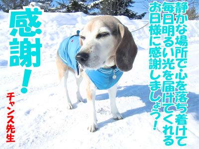 チャンスとティアラ+ココ-20120221-1-400.jpg