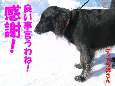 チャンスとティアラ+ココ-20120221-2-400.jpg