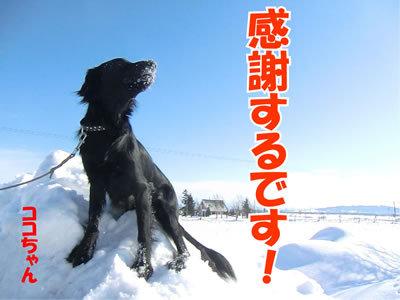 チャンスとティアラ+ココ-20120221-3-400.jpg