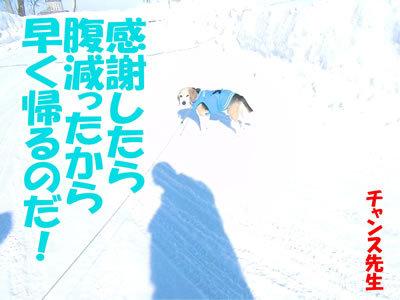 チャンスとティアラ+ココ-20120221-4-400.jpg