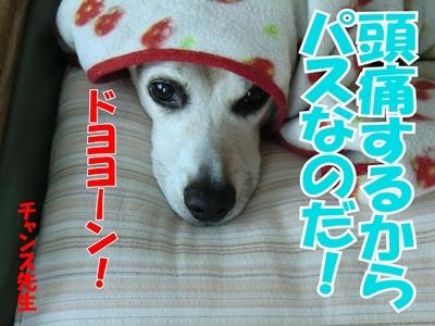チャンスとティアラ+ココ-20120222-1-400.jpg