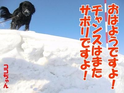 チャンスとティアラ+ココ-20120222-2-400.jpg