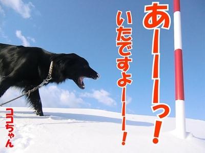 チャンスとティアラ+ココ-20120222-3-400.jpg