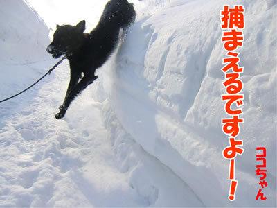 チャンスとティアラ+ココ-20120222-4-400.jpg