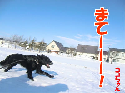 チャンスとティアラ+ココ-20120222-5-400.jpg