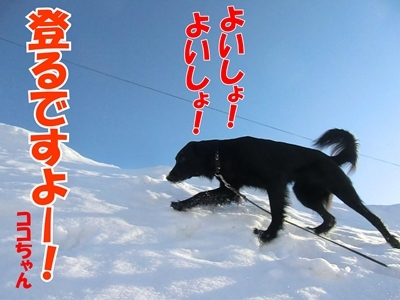 チャンスとティアラ+ココ-20120222-6-400.jpg
