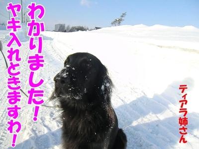 チャンスとティアラ+ココ-20120222-9-400.jpg