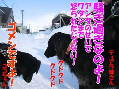 チャンスとティアラ+ココ-20120222-10-400.jpg