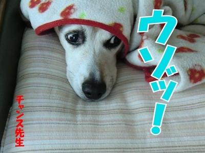 チャンスとティアラ+ココ-20120222-11-400.jpg