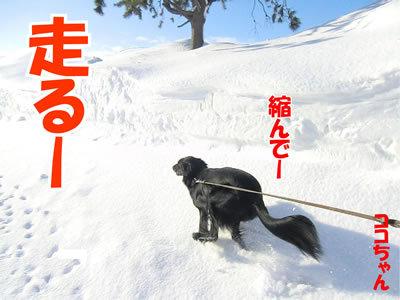 チャンスとティアラ+ココ-20120223-2-400.jpg