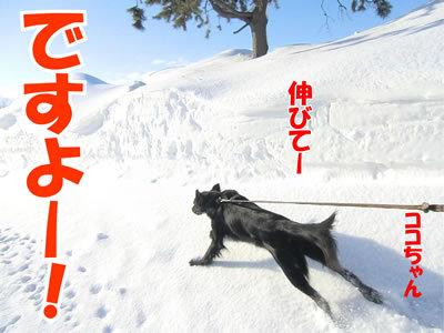 チャンスとティアラ+ココ-20120223-3-400.jpg