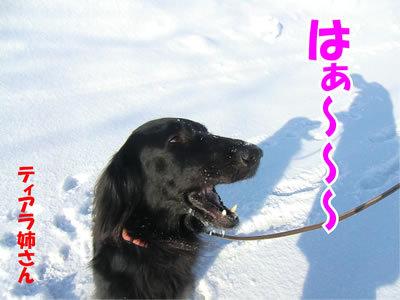 チャンスとティアラ+ココ-20120223-4-400.jpg