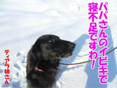 チャンスとティアラ+ココ-20120223-6-400.jpg