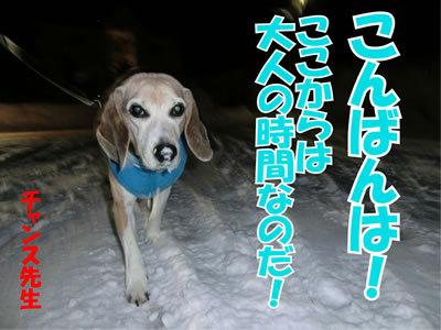 チャンスとティアラ+ココ-20120223-7-400.jpg