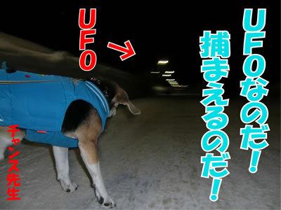 チャンスとティアラ+ココ-20120223-9-400.jpg