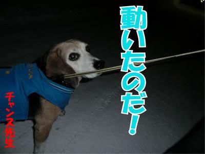 チャンスとティアラ+ココ-20120223-10-400.jpg