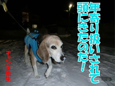 チャンスとティアラ+ココ-20120223-11-400.jpg